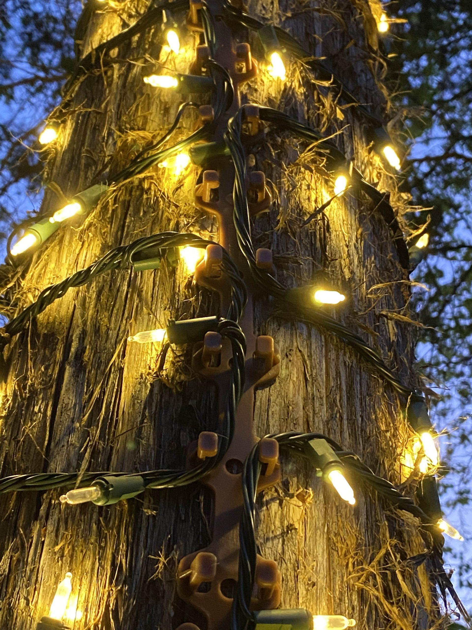 On Tree_vertical-min